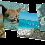 Excursion Caraibes exumas